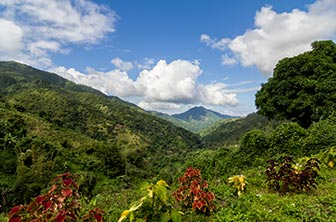 Jamaican-Blue-Mountains